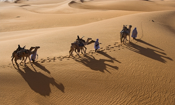 Men Leading Camels in Desert