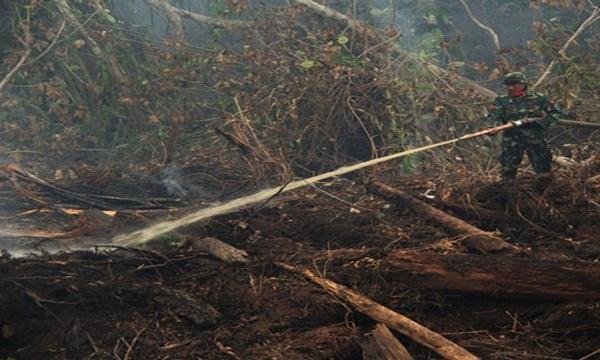 Titik Api di Cagar Biosfer Riau Berhasil di Padamkan