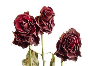 [Sya'ir] Mawar yang Malang